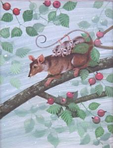 Vačice s mláďaty na větvi