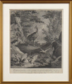 Johann Elias Ridinger - Ptáci u vody (1).JPG