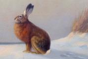 Heinz Roder - Zajíc na sněhu (4).JPG