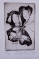 Naděžda Plíšková - Pět exlibris, Motýli, Listy (6).JPG