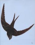 Jan Kudlacek - Swallow