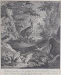 Johann Elias Ridinger - Ptačí zahrada