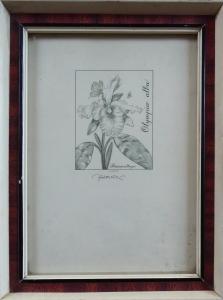 Josef Herčík - Orchidej (1).JPG