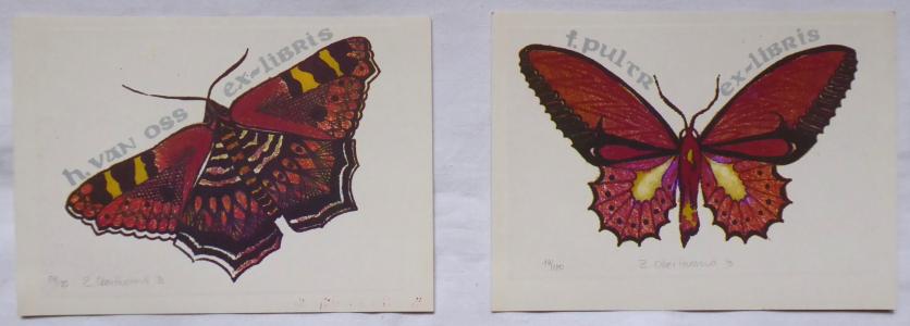 Zuzana Oberthorová - Motýli (1).JPG